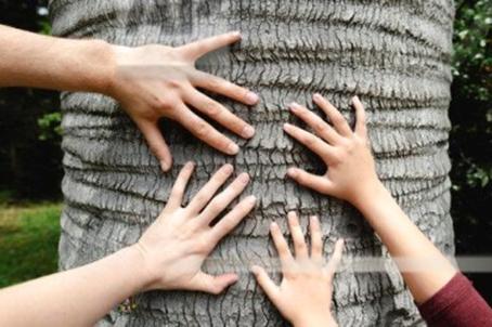 همه چیز راجع به تنه ی درخت -  از کجا می توان تنه ی درخت خریداری کرد؟