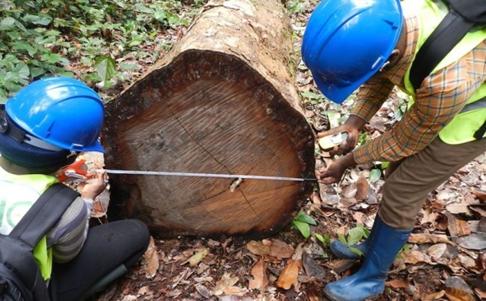 همه چیز راجع به تنه ی درخت -  چگونه شرکت های صنایع چوبی را برای خرید تنه ی درخت پیدا کنیم؟