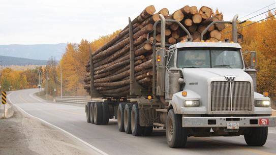همه چیز راجع به تنه ی درخت -  حمل و نقل تنه های درختان به کارخانه های چوب بری