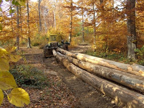 چوب راش- جنگل چوب راش