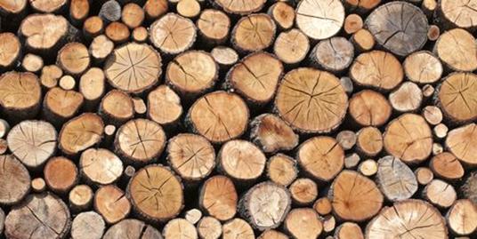 همه چیز راجع به درخت و چوب سپیدار -  کنده های چوب بریده شده درخت سپیدار