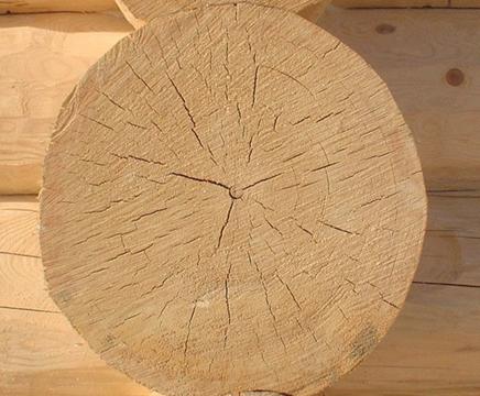 دانستنی هایی راجع به درخت و چوب صنوبر -  ویژگی های چوب درخت صنوبر