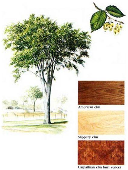 انواع چوب ملچ