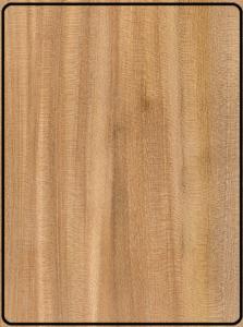 چوب ملچ بالدار , نام علمی چوب ملچ , چوب نارون آمریکا