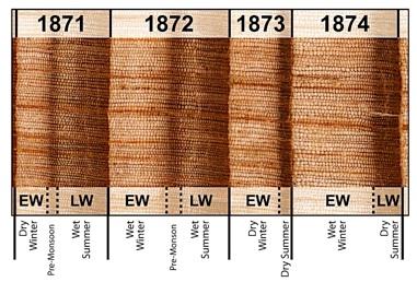 مراحل ایجاد چوب در یک سال بسته به آب و هوا و شرایط خاک متغیر است