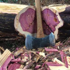 چوب درون بنفش یا چوب ارغوانی
