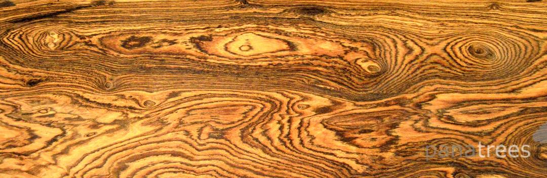 گران ترین چوب جهان , با ارزشمندترین چوب های جالب و شگفت انگیز دنیا