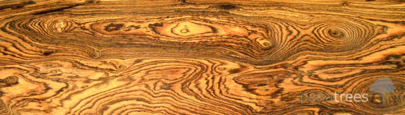 چوب Bocote , بوکوت , چوب بوکوت مکزیکی