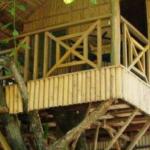خانه چوبی درختی ساخته شده از تیر های چوبی گرد