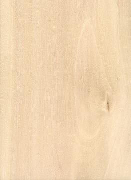 انواع چوب- چوب ممرز