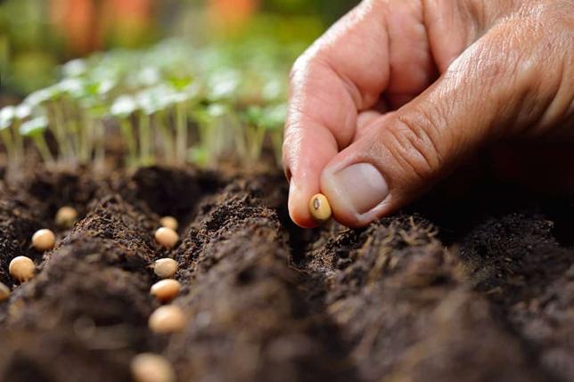 بهترین مکان برای پرورش درختان تبریزی