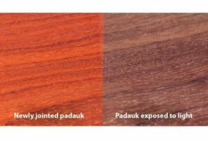 چوب پادوک قبل و بعد از قطع از درخت