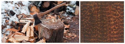 سخت ترین چوب های جهان کدام هستند؟