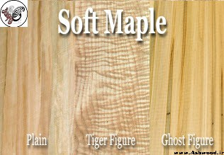 چوب افرا , خواص و کاربرد چوب افرا + قیمت انواع چوب