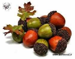زیبایی های بلوط , میوه بلوط , چوب بلوط