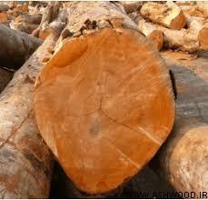 چوب اکومه چیست