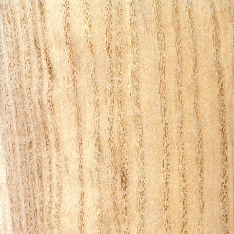 سوال و جواب درباره چوب پالونیا و قیمت چوب، معرفی انواع چوب