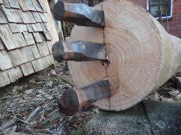 چوب پالونیا
