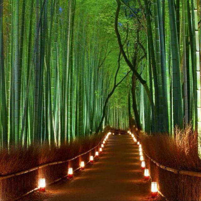 جنگل بامبو با دکوراسیون و نورپردازی بسیار زیبا
