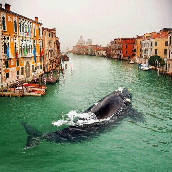 مشهورترین عکس سال ۲۰۱۴ از ونیز که در جهان کلی سرو صدا کرد.