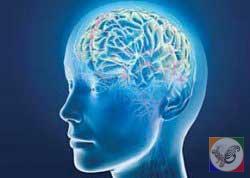 10 حقيقت عجيب درباره مغز