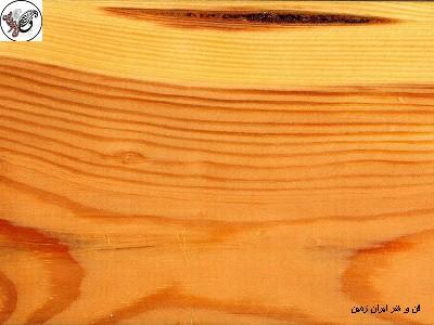 چوب کاج ساسنا
