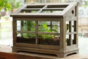 معماری و دکوراسیون داخلی منزل ، فضای سبز ، تراریوم گیاهان آپارتمانی