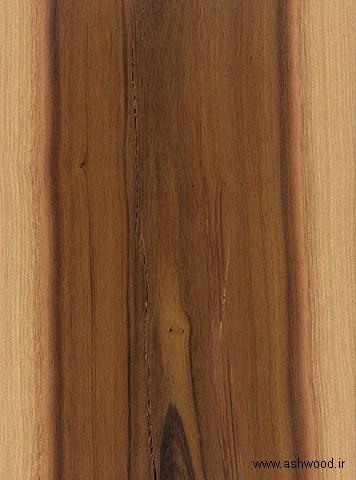 چوب آهنی , leadwood درخت اهن سیاه و سفید Krugiodendron ferreum