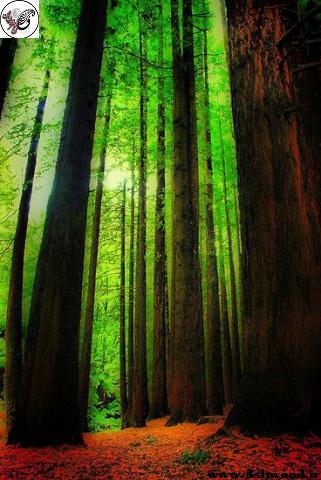 آمار درباره جنگل و چوب ایران