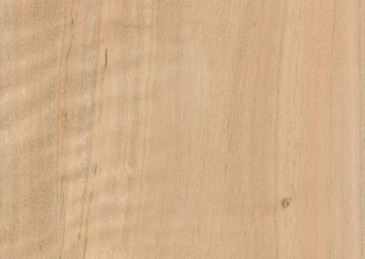 چوب اکالیپتوس , انواع چوب