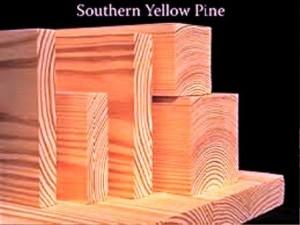 Southern Pine انواع چوب چوب کاج درختان سوزنی برگ