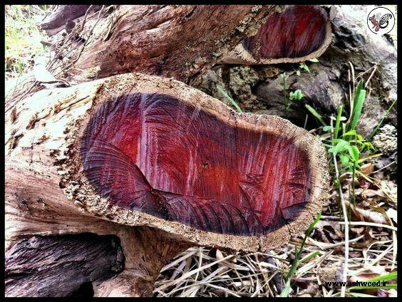 مقاله مشخصات چوب کهور ایران , شناخت انواع چوب