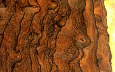 چوب کوردیا